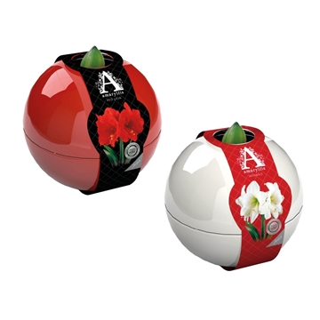 Amaryllis Artist Ball & Sleeve, Mixed