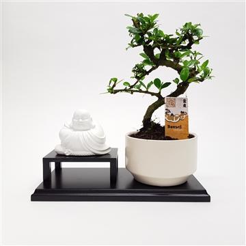 Buddha Bonsai