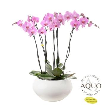 Opti-Grandi licht roze in Cora (3dagen levertijd)