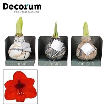 No Water Flowers Waxz® Art Rembrandt Mix in Boxz (Decorum)