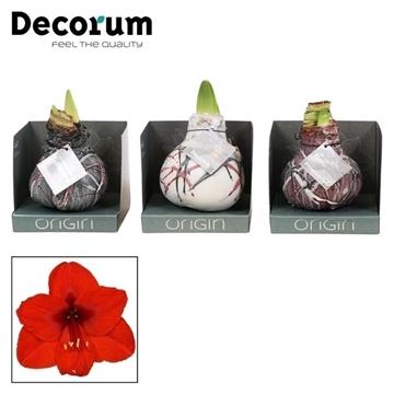No Water Flowers Waxz® Art Van Gogh Mix in Boxz (Decorum)