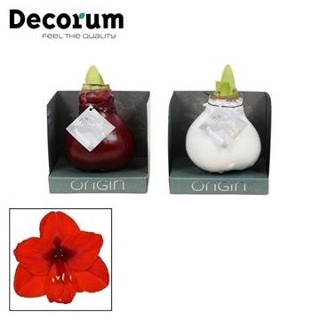 No Water Flowers Waxz® gemengde kleuren in Boxz (Decorum)