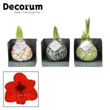 No Water Flowers Waxz® Art Picasso Mix in Boxz (Decorum)