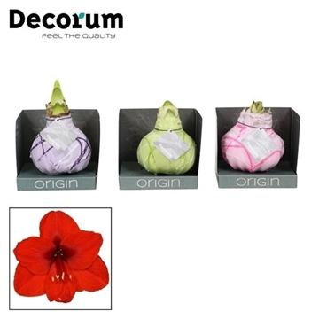No Water Flowers Waxz® Art Monet Mix in Boxz (Decorum)