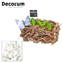 Hyacint Twigs Box HL17793WP [BLACK & WHITE]