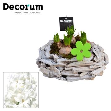 Hyacint Hout Schaal HL17783WP [BLACK & WHITE]