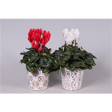 Collectie 'Precious' - Cyclamen in keramiek Jen Rood - Wit (Kerst)