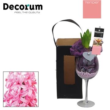 Hyacint Wijnglas HL16064PP [TENDER]