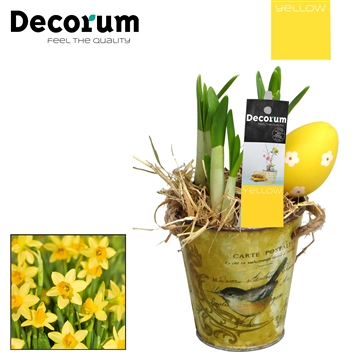 Narcis Little Spring Bucket HL15475 [YELLOW]