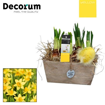 Narcis Hout Duo HL15625 [YELLOW]
