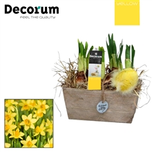Narcis Hout Duo HL5625 [YELLOW]