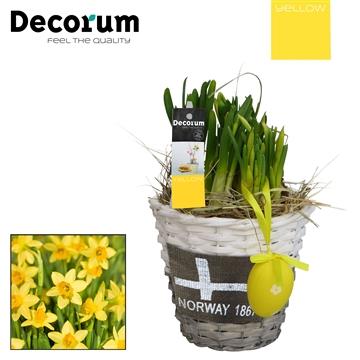 Narcissus Gevlochten Mand Rond HL15705 [YELLOW]