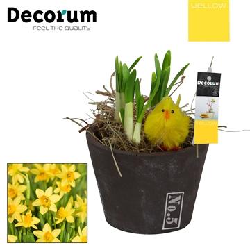 Narcis No 5 Mini HL16265 [YELLOW]