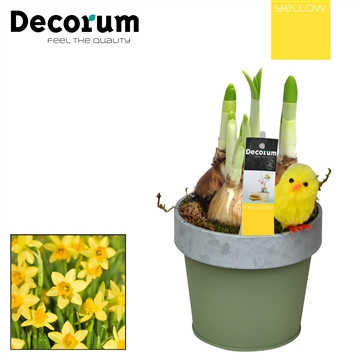 Narcis Bucket & Border Mini HL17515 [YELLOW]