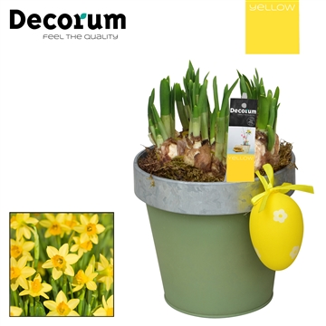 Narcis Bucket & Border Maxi HL17525 [YELLOW]