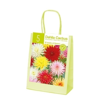 XL-Summer Dahlia Cactus Mix