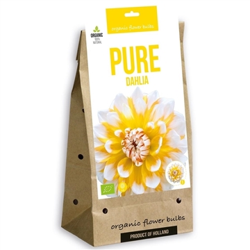 Pure Dahlia Decorative Mix (3x4)