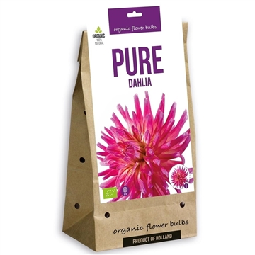 Pure Dahlia Cactus/Impression Mix (3x4)