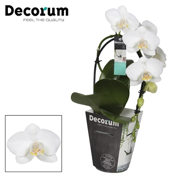 Decorum cascade 1tak wit P9