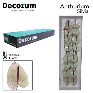 ANTH A SILVIA Decorum