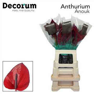 ANTH ANOUK IMP 30 XL Decorum
