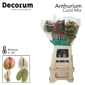 ANTH A WATER COLD MIX 30 L Decorum