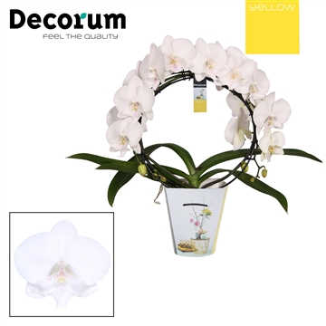 Decorum Mirror Biglip Yellow