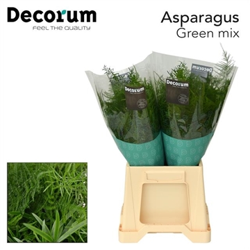 ASPARAGUS green mix 40cm DC