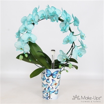 Make upz bow blue + undrcover