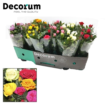 Potrozen P10,5 Decorum Feel