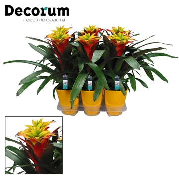 Guzmania Fancy Luxe Keramiek (Decorum)