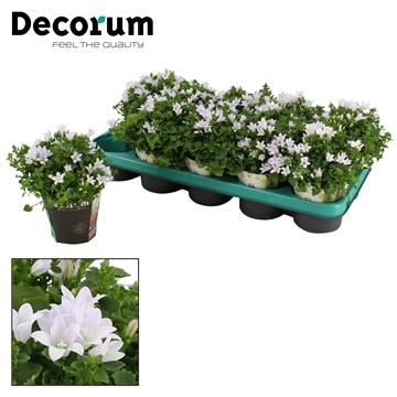 DECORUM-Ambella White 10,5 cm