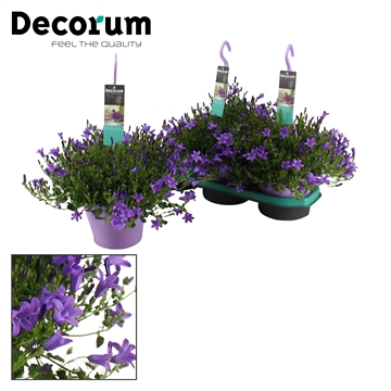 DECORUM-Ambella Purple 19 cm