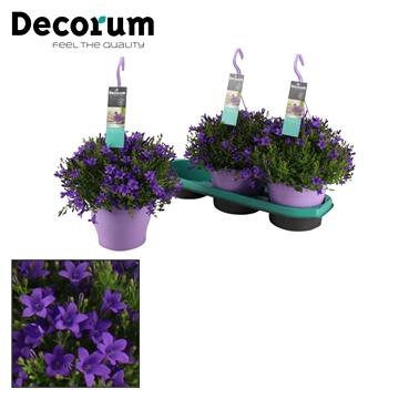 DECORUM-Ambella Intense Purple 19 cm