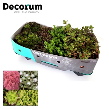 Rotsplanten Mix Decorum P14