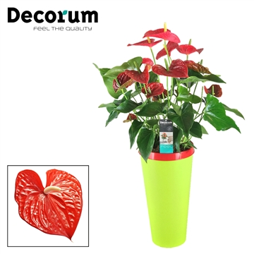 Anthurium Michigan pot 26 incl watersysteem