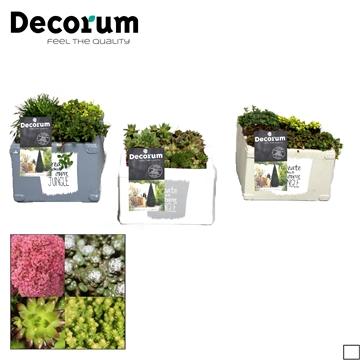 Rotsplanten in Vierkante Sierpot Decorum P14