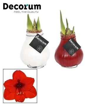 No Water Flowers Waxz® gemengde kleuren (Decorum)