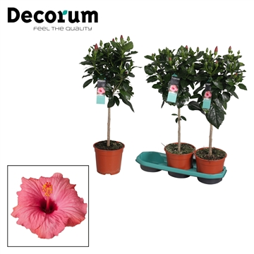 Hibiscus op stam - 19 cm - Venetië (pink) - Decorum