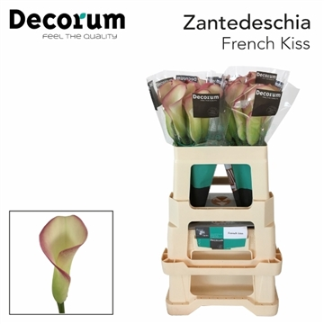 ZANT FRENCH KISS