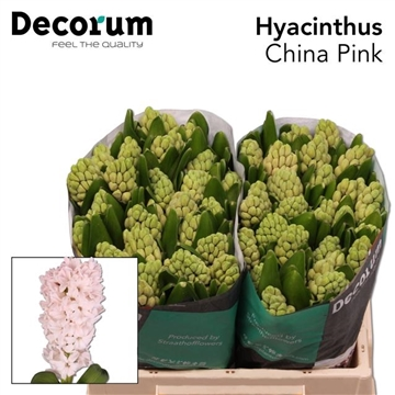 HYAC CHINA PINK Deco