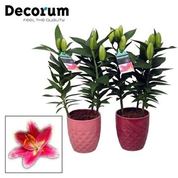 Lilium Oriental Roze 13cm keramiek Diamond
