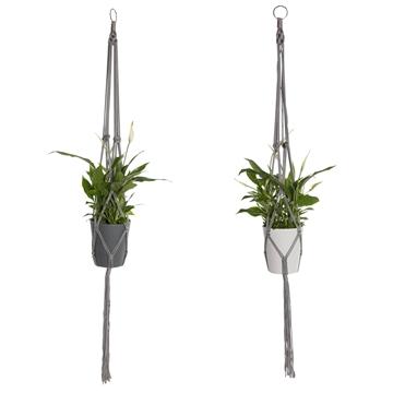Spathiphyllum 13 cm 'Bellini®' in Macrame hanger