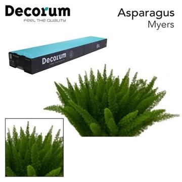 ASP myers 40cm box