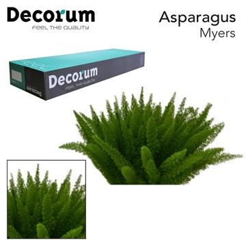 ASP myers 50cm box