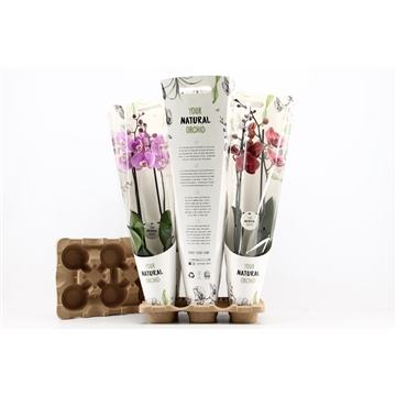 "2-tak in cadeauverpakking ""Your Natural Orchid"""