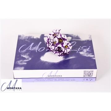 Lisianthus  monolisi fleurelisa blu