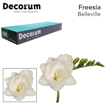 Fr du Belleville Decorum