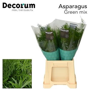 ASPARAGUS green mix 40cm (50) dc
