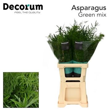 ASPARAGUS green mix 65cm (50) dc